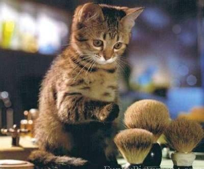 Funny Cat Watching the Shaving Brush