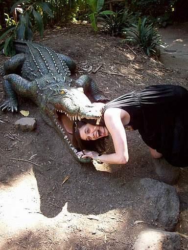 Funny crocodile picture