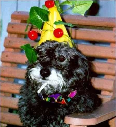Funny Dog Birthday Party