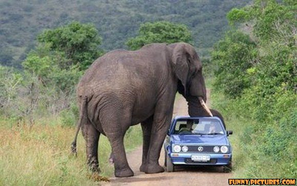 Funny Elephant Attack on Car Picture