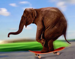 Funny Elephant Skating Picture