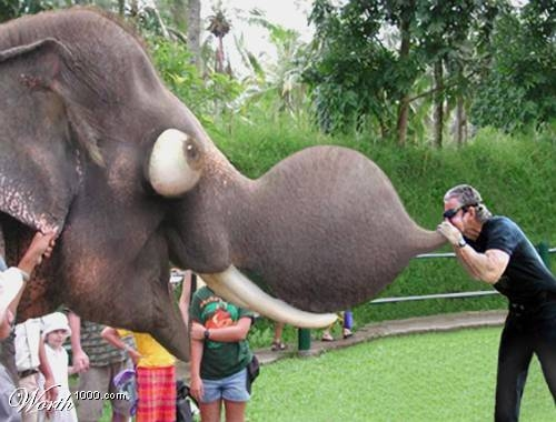 Funny Elephant Prank Picture