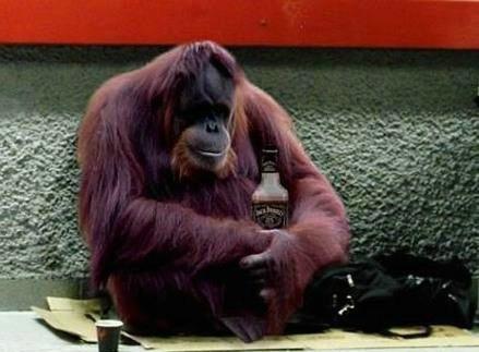 Funny Monkey Drunker For Fb Share