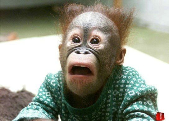 Funny Monkey Face Picture for Fb Share