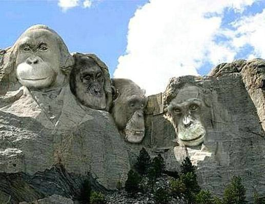 Funny Monkey Mountain Picture