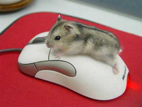 עכבר על עכבר