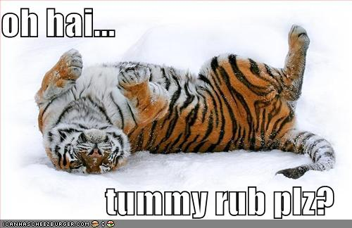 Oh Hai Funny Tiger Picture