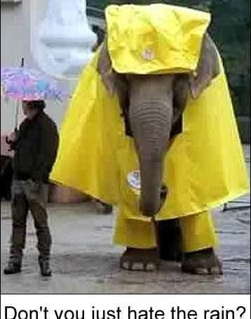 Http www graphics99 com funny elephant raincoat picture