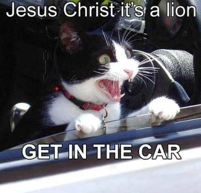 Funny Cat Inside the Car
