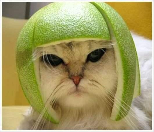 Funny Cat Handmade helmet