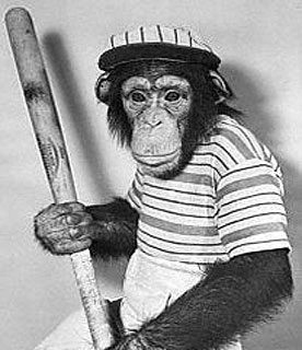 Funny Monkey Baseball Player Picture