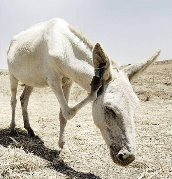 Funny White Horse Picture for Orkut