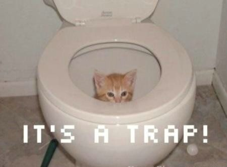 It's a Trap ! Funny Cat Picture