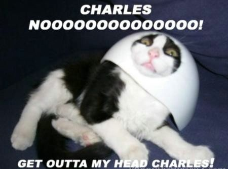 Get Outta my Head Charles ! Funny Cat Picture