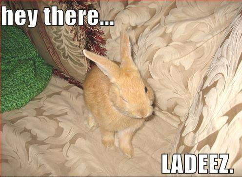 Hey are you there funny Rabbit Picture