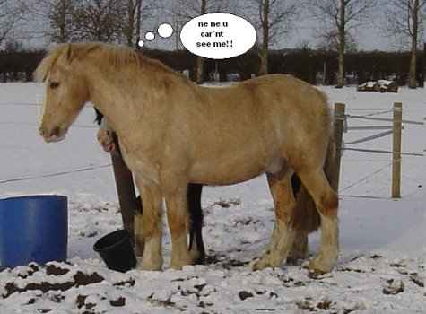 Funny Horse Image for Facebook Sharing