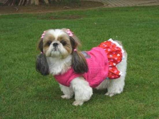 Funny Dog in Dress Picture for Orkut