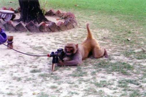Machine Gun Monkey Picture