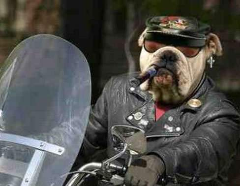 Funny Dog the Best Biker Picture