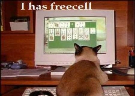 I Am The Best Player Funy Cat Picture