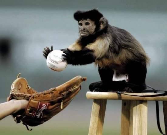 Funny Monkey PLaying the Baseball