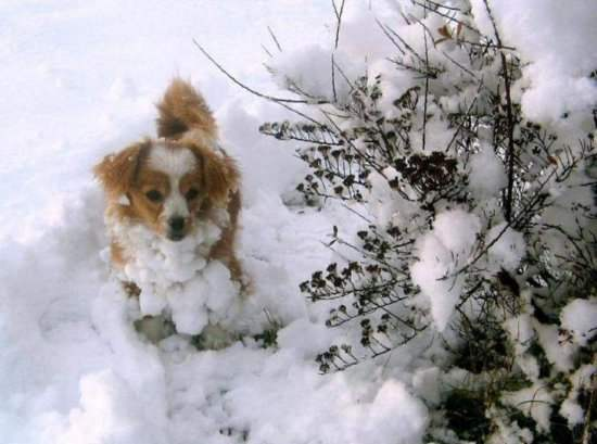 I fell in snowfall Funny Dog Picture