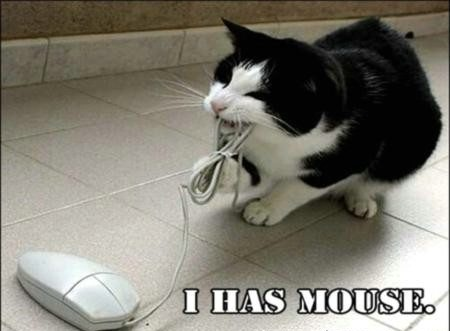 I has a Mouse Funny Cat Picture