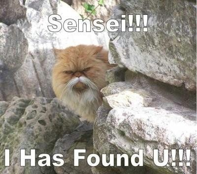 I has Found you !!! Funny Cat Picture