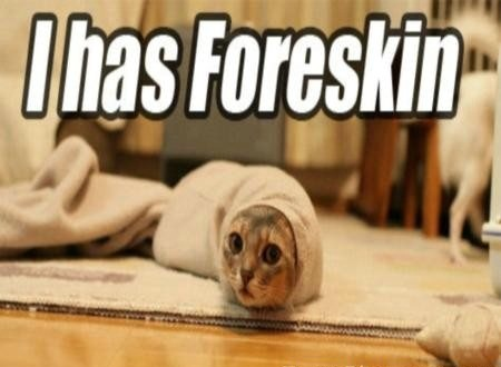 I has Foreskin Funny Cat Picture for Fb Share