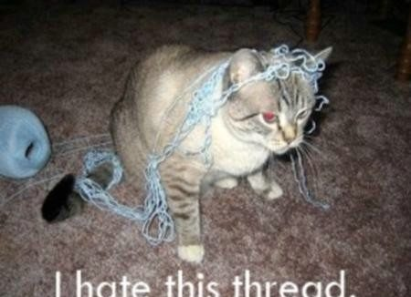 I Hate This Thread Funny Cat Picture