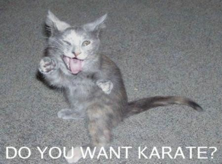 Do you Want Karate ? Funny Cat Picture