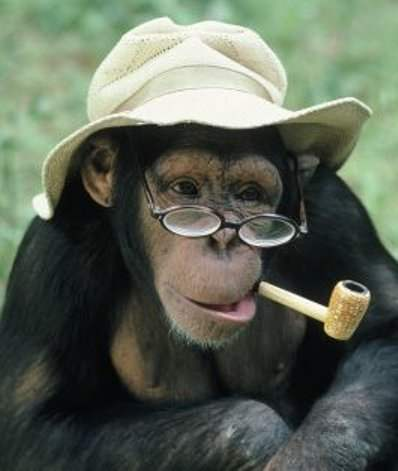 Funny Monkey Smoking Picture for Fb Share