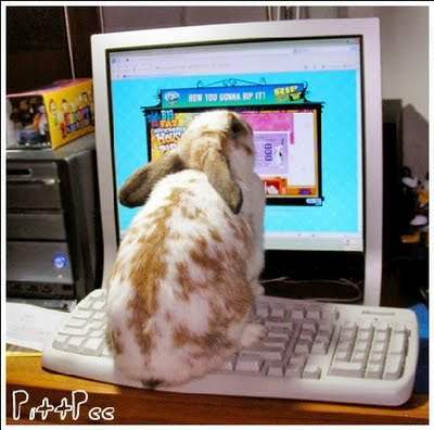 Funny Rabbit Picture for Fb Share