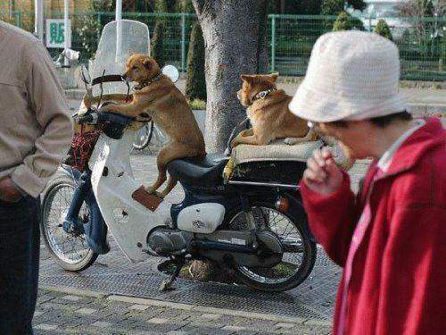 Funny Monkey Sitting on the Bike