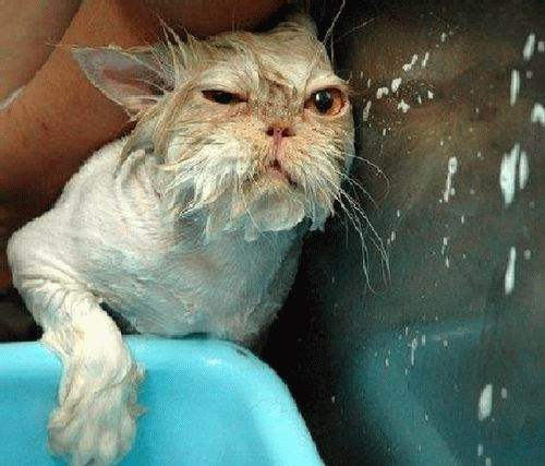 Funny Cat bathing Picture