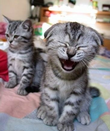 Funny Cat Crying Picture