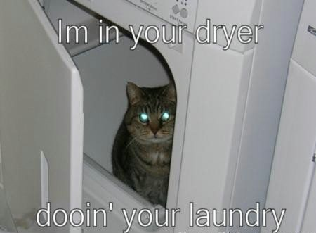 Funny Cat inside the Washing Machine