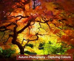 Autumn Graphic for Friendster