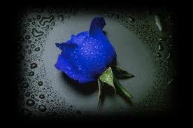 Beautiful Small Blue Rose Picture for orkut