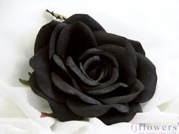 Black Rose Graphic for Facebook Sharing