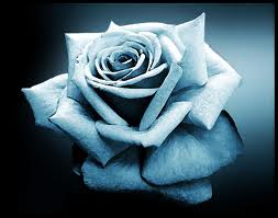 Light Blue Rose Scrap for Orkut