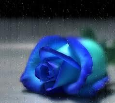 Awesome Small Blue Rose Image for Orkut