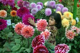 Awesome Flowers Picture for Orkut