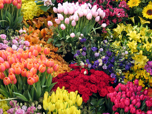 Awesome Flowers Picture for Fb Share