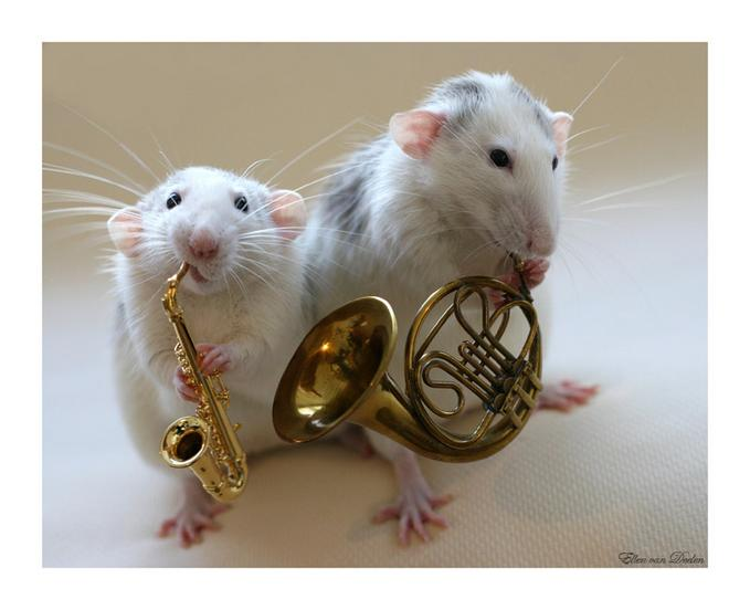 Funny Mouse band Company Picture