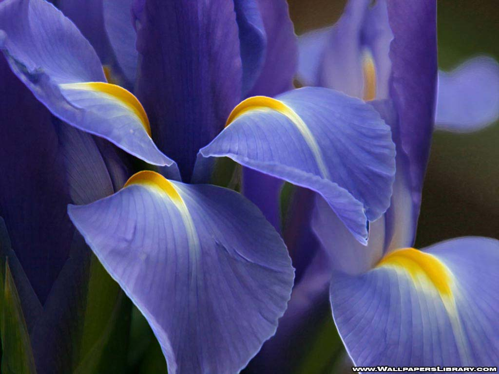 Purple Flower Image for Fb Sharing