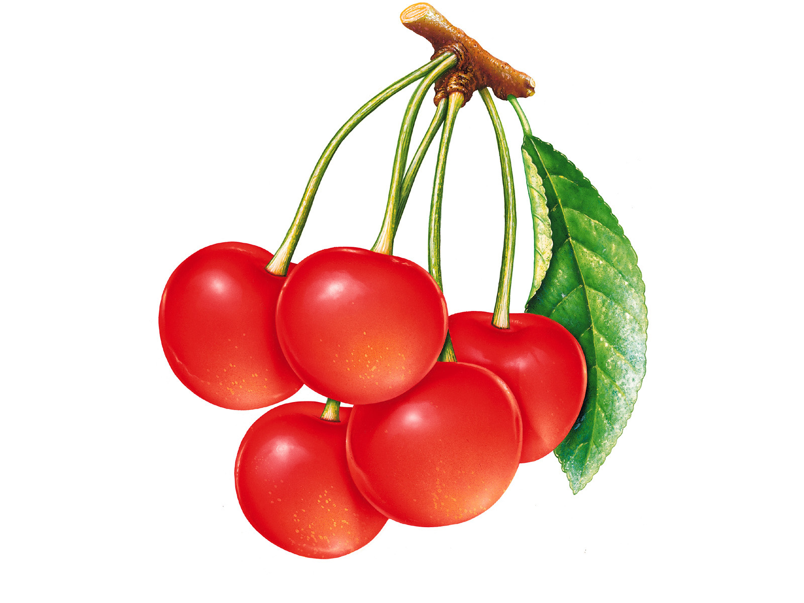 Red Cherry Picture