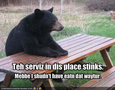 Funny Black bear Picture