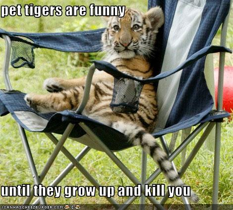 Pet Tigers are Funny