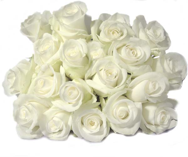 A Bouquet of White Roses Picture